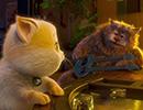 16251_Cats2.jpg